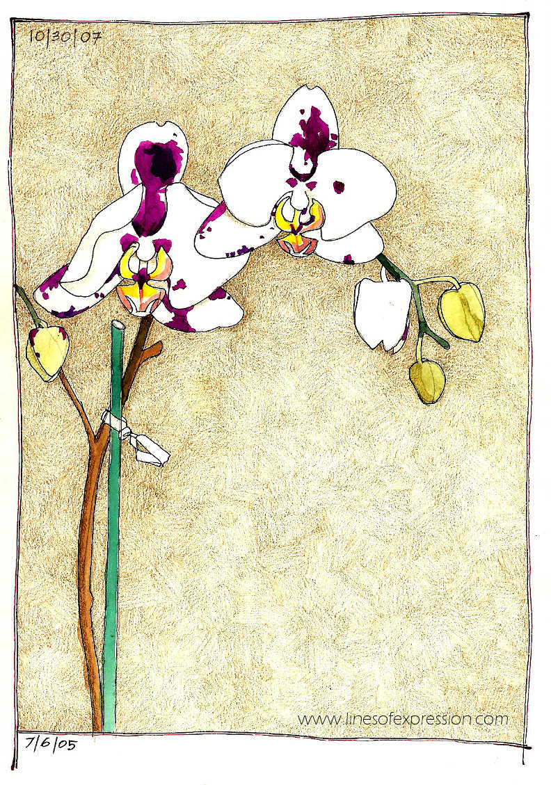 Rebecca Payne. Colored pencil and ink sketchbook orchid drawing.