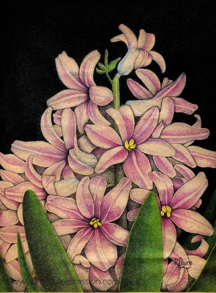 Five drawing mistakes are outlined in this post about a vintage colored pencil drawing of hyacinths by Rebecca Payne around 1990.